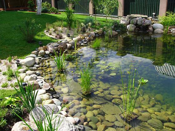 Ландшафт дизайн реконструкция пруда