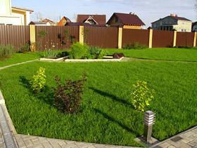 Газон и декоративный огород перед