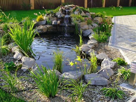 фото пруды садовые