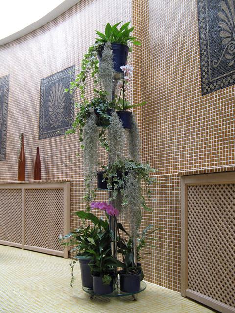 Комнатные цветы с длинным корнем